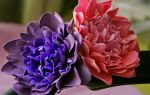 Выбор пастели для фоамирана: 3 критерия